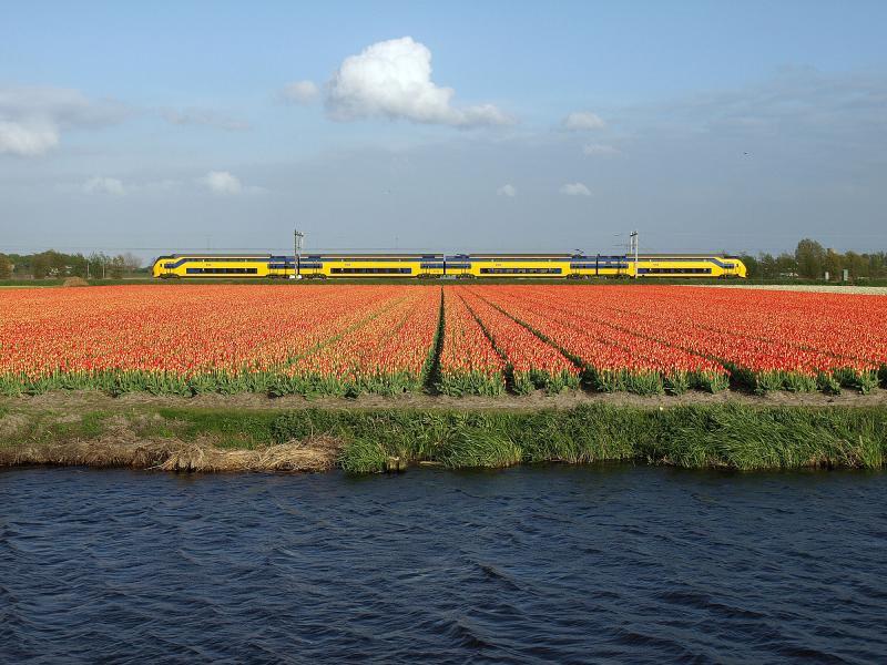Het donkere water van de Leidschevaart, de rode tulpen, de gele trein en de blauwe lucht zijn netjes op elkaar gestapeld op deze foto van 13 mei 2013. Het voorjaar was extreem koud - temperaturen van -20 in februari - waardoor de tulpen pas laat in bloei kwamen.