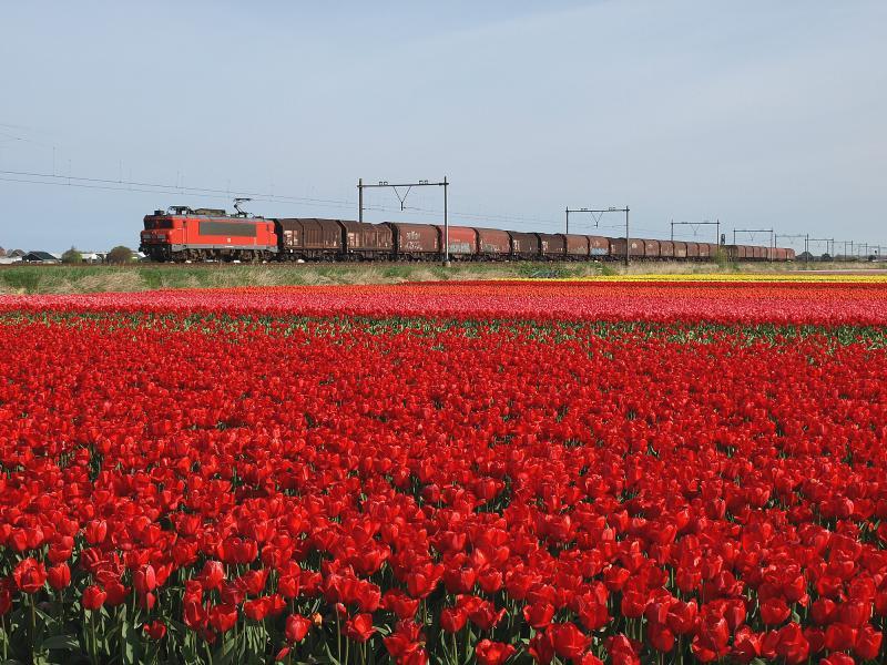 Op ongeveer dezelfde plek als foto 11, maar dan aan de oostzijde van de spoorlijn, is op 12 april 2014 een van de weinige goederentreinen te zien die van dit deel de Oude Lijn gebruikmaakt. Het is de bekende staaltrein 61601, die elke morgen rond 10.45 uur passeert. In het voorjaar van 2016 reed deze trein slechts een enkele keer. Niet omdat er geen staal wordt vervoerd, maar omdat de trein door werkzaamheden op de Betuweroute werd omgeleid via Amsterdam.