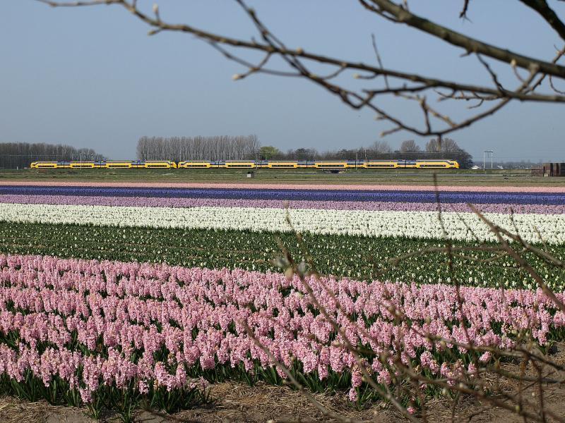 Ter hoogte van de Frederikslaan, aan de oostzijde van de Oude Lijn, rijden op 30 april 2014 twee gekoppelde VIRM-treinstellen naar Haarlem. Door werkzaamheden op de Schiphollijn rijden er op deze dag gekoppelde stellen op de Oude Lijn.