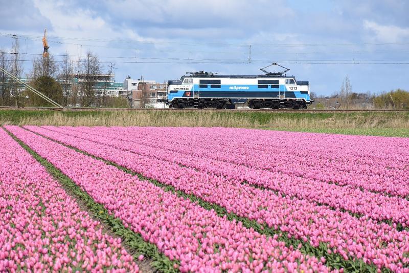 Lichtblauw combineert mooi met roze, zoals loc 1215 van Railpromo bewijst. Op 17 april 2016 was de loc onderweg op de Oude Lijn en de Schiphollijn voor roestrijden na werkzaamheden.