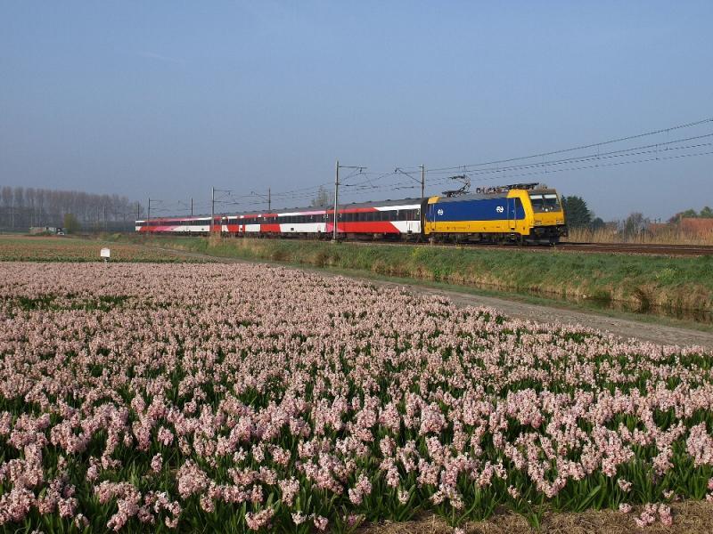 De oostzijde van de boog van de Schiphollijn is een bekend fotopunt. Door de boog kun je de treinen meestal goed in beeld krijgen en er staan elk jaar wel andere bollen. Op 24 april 2015 ging ik tussen 07.00 en 08.30 uur even naar deze plek om een foto te maken van de Railpool 2861 in de Beneluxdienst. De trein kwam inderdaad voorbij, net als vier omgeleide Intercity Direct-treinen, die door een storing op de HSL werden omgeleid...