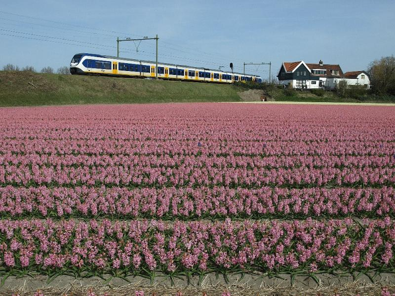 De huisjes aan de oostkant van de overweg in de Nieuweweg zijn een veelgebruikt fotomotief. Op 12 april 2015 stonden er mooie roze hyacinten in het bollenveld langs de spoorbaan.