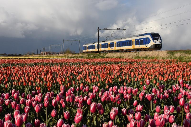 Vanaf Hillegom volgt de Oude Lijn de Leidschevaart of Haarlemmertrekvaart, die in 1656 is gegraven als waterverbinding tussen Haarlem en Leiden. Vanaf Lisse ligt de spoorlijn zelfs naast de Leidschevaart. Iets ten zuiden van Hillegom liggen er tussen de spoorlijn en het water nog enkele bollenvelden. Op 24 april 2016, aan het eind van de middag, is een SLT onderweg van Hillegom naar Leiden. De donkere wolken beloven weinig goeds, maar ingewijden weten beter. Als het in het binnenland regent, schijnt in de kuststrook vaak de zon. Dat is ook een van de redenen dat bolbloemen het hier zo goed doen. Ze krijgen al vroeg in het voorjaar volop zonlicht.
