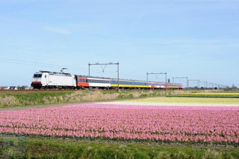 Na het echec van de V250 ziet de Beneluxtrein er nu zo uit: een eloc met speciale rijtuigen. In dit geval een loc van de NMBS, de Belgische spoorwegmaatschappij. Traxx-locomotief 2844 passeert op deze foto de bollenvelden te Hillegom op een omgeleide route. Dennis Koster heeft deze foto gemaakt op 12 april 2015.